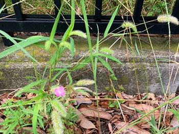 小道の草花