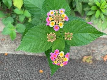 浅小道の草花